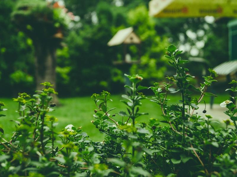 Soins des plantes